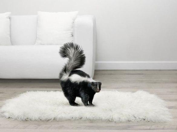 carpet-odour