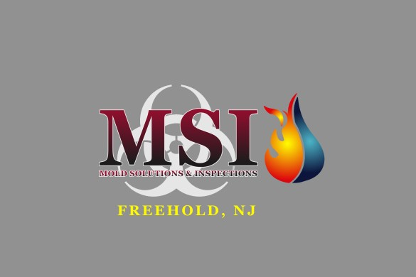 NEW MSI LOGO freehold nj3 bold